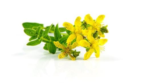 セントジョンズワートの花